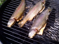hot smoked trout