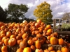 Plump Pumpkins at Alder Carr